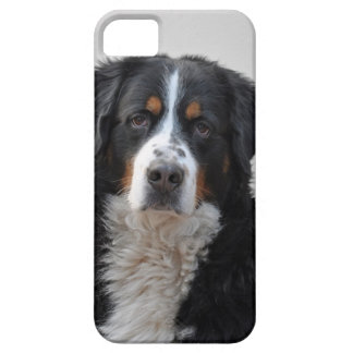 バーニーズ・マウンテン・ドッグの美しい写真、ギフト iPhone SE/5/5s ケース