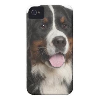 バーニーズ・マウンテン・ドッグ(1歳) Case-Mate iPhone 4 ケース