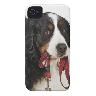 バーニーズ・マウンテン・ドッグ(Berner Sennenhund) Case-Mate iPhone 4 ケース