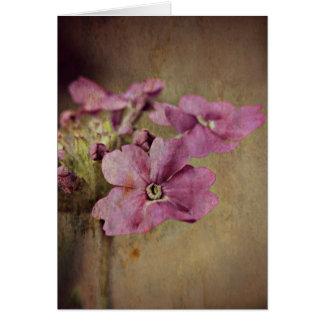 バーベナの敏感なピンクの花 カード