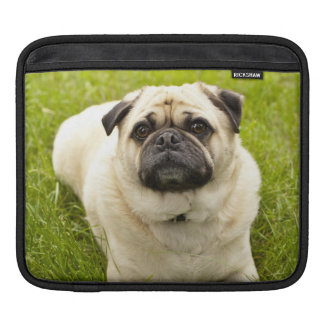 パグのかわいい犬の美しい写真、ギフト iPadスリーブ