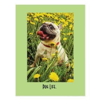 パグの生命犬の郵便はがき ポストカード