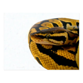 パステル調の球の大蛇 ポストカード