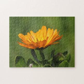 パズル- Calendulaの花 ジグソーパズル