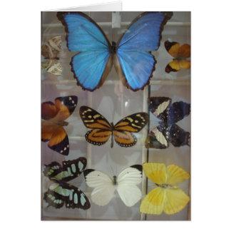 パナマの蝶 カード