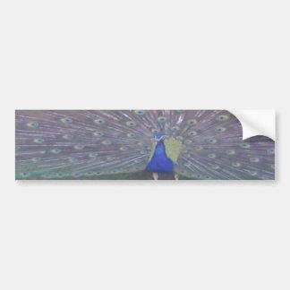 パノラマの孔雀 バンパーステッカー