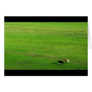 パノラマ式の牧草地の2頭の牛 カード