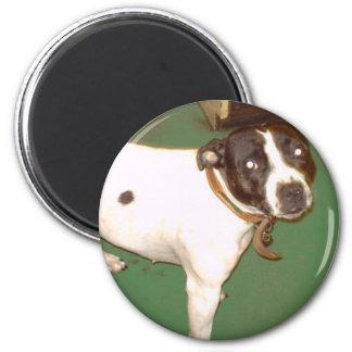 パブ犬1 マグネット