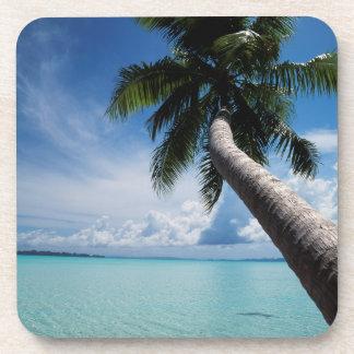 パラオ諸島、ミクロネシアのパラオ諸島の礁湖のヤシの木 コースター