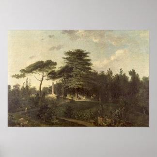 パリ植物園のレバノンのヒマラヤスギ ポスター