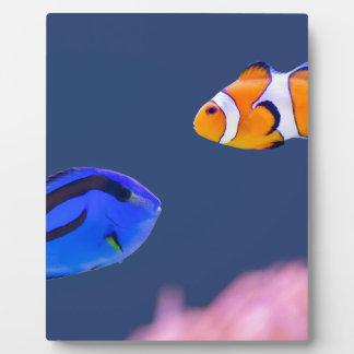 パレットのsurgeonfishおよびピエロの魚の水泳 フォトプラーク