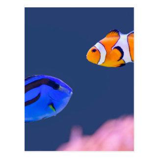 パレットのsurgeonfishおよびピエロの魚の水泳 ポストカード