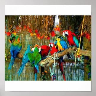 パレードのコンゴウインコ ポスター