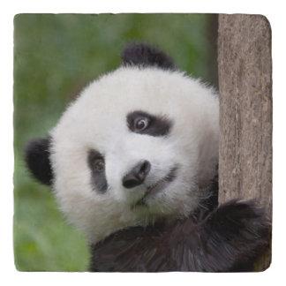 パンダの幼いこどもの絵画のtrivet トリベット