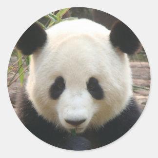 パンダの熟考 ラウンドシール