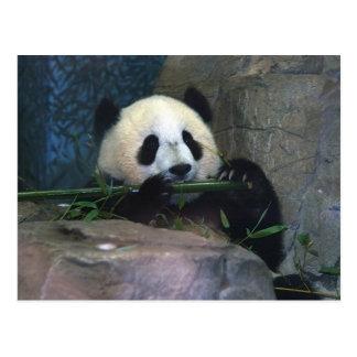 パンダの郵便はがき ポストカード