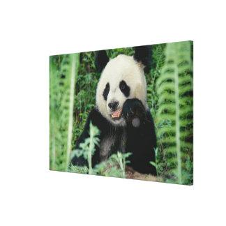パンダ森林、Wolong、四川の中国 キャンバスプリント