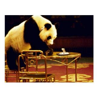 パンダ、上海のサーカス、中国 ポストカード