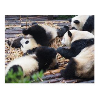 パンダ、成都の中国の郵便はがき ポストカード