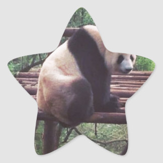 パンダ 星シール