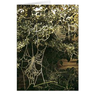 ヒイラギ木の蜘蛛の巣 カード