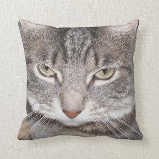 ヒイラギ猫 クッション