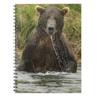 ヒグマ、サケのために採取している男性 ノートブック