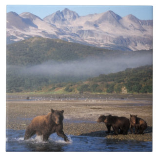 ヒグマ、灰色グマ、幼いこどもが付いている雌豚の魚釣り、 タイル