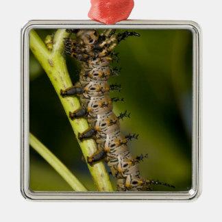 ヒッコリーの角状の悪魔の幼虫(Citheronia メタルオーナメント