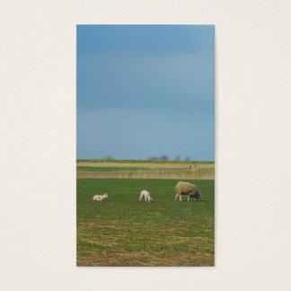 ヒツジの写真の芸術カード 名刺