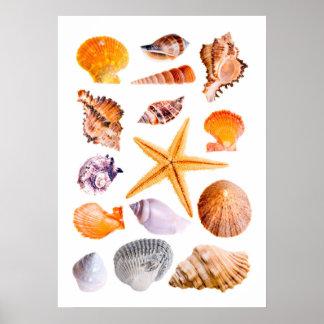 ヒトデおよび貝のプリントポスター ポスター