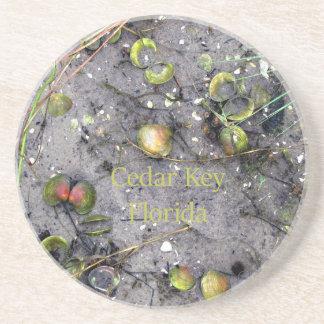 ヒマラヤスギの鍵、フロリダのビーチのハマグリ コースター