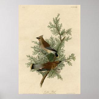ヒマラヤスギの鳥 ポスター