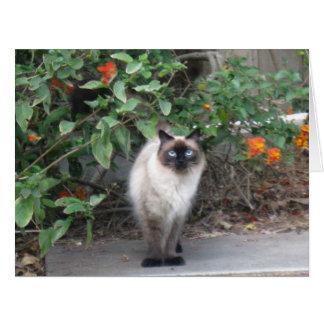ヒマラヤ組合せ猫 カード