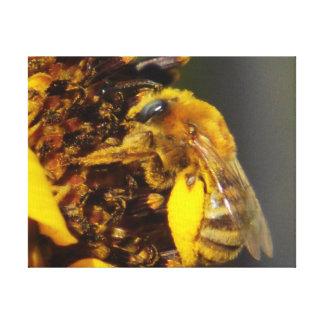 ヒマワリのキャンバスの《昆虫》マルハナバチ キャンバスプリント