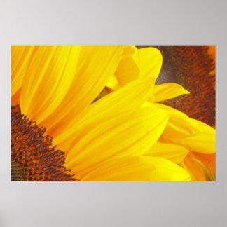 ヒマワリの花びらポスター ポスター