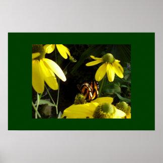 ヒマワリの(昆虫)オオカバマダラ、モナーク ポスター