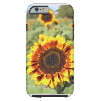 ヒマワリのiPhone6ケース ケース