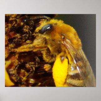 ヒマワリポスターの《昆虫》マルハナバチ ポスター