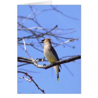 ヒメレンジャクの野鳥観察の挨拶状 カード