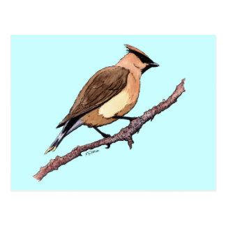 ヒメレンジャクの鳥 ポストカード