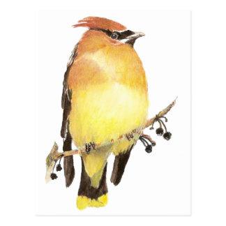 ヒメレンジャク、水彩画の鳥 ポストカード