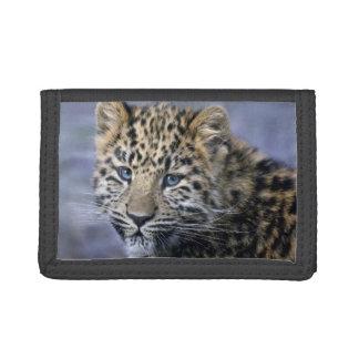 ヒョウのカブスの財布