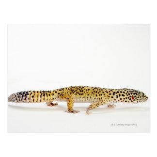 ヒョウのヤモリのトカゲの側面図 ポストカード