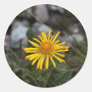 ヒョウの命とりの花 ラウンドシール