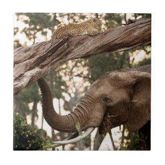 ヒョウの象(Loxodonta)のテストのにおい タイル