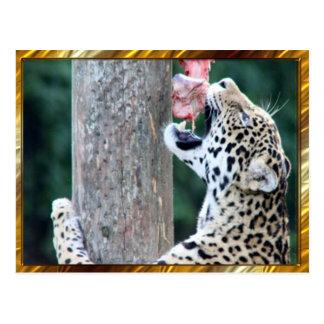 ヒョウの食べ物肉郵便はがき ポストカード