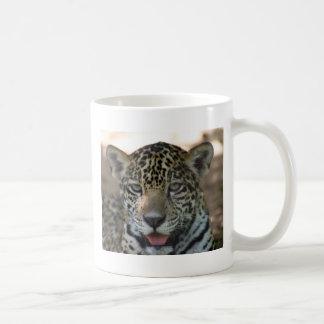 ヒョウカブス コーヒーマグカップ