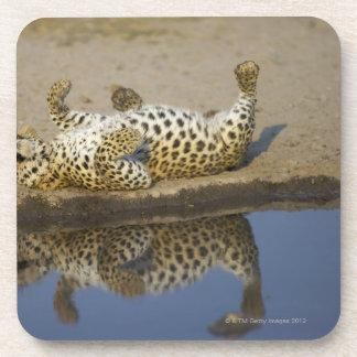 ヒョウ(ヒョウ属のpardus)の女性の圧延 コースター
