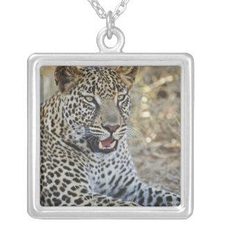 ヒョウ、ヒョウ属のpardus、Samburuのゲーム シルバープレートネックレス